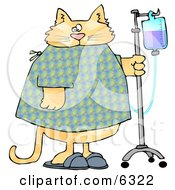 Orange Tabby Cat With An IV Dispenser In A Hospital Clipart Picture