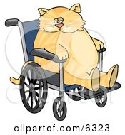 Chubby Orange Cat Sitting In A Wheelchair In A Hospital