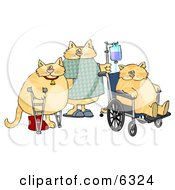 Three Orange Cats With IV Dispensers Crutches Casts And Wheelchairs In A Hospital Clipart Picture