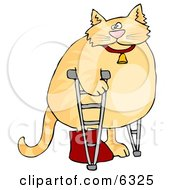 Chubby Orange Cat Walking On Crutches In A Hospital One Leg In A Cast