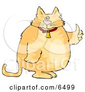 Chubby Orange Cat In A Bell Collar Giving The Thumbs Up