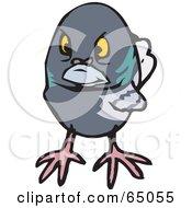 Grumpy Pigeon Facing Front