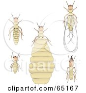 Royalty Free RF Clipart Illustration Of A Digital Collage Of Termites by Dennis Holmes Designs