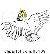 Royalty Free RF Clipart Illustration Of A Flying Sulphur Crested Cockatoo Looking Back