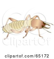 Royalty Free RF Clipart Illustration Of A Crawling Termite by Dennis Holmes Designs