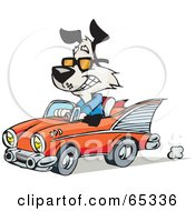 Royalty Free RF Clipart Illustration Of A Black And White Dog Driving A Classic Convertible Car
