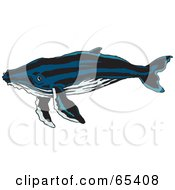 Royalty Free RF Clipart Illustration Of A Swimming Blue Whale With Black Stripes