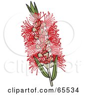 Royalty Free RF Clipart Illustration Of A Red Swamp Bottlebrush Flower by Dennis Holmes Designs