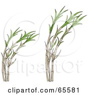 Royalty Free RF Clipart Illustration Of Growing Cane Plants