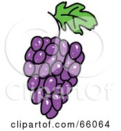 Royalty Free RF Clipart Illustration Of A Sketched Purple Grapes