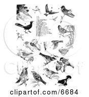 Group Of Birds Thrushes Cardinals Swallows Warblers Tanagers And Woodpeckers Clipart Illustration by JVPD