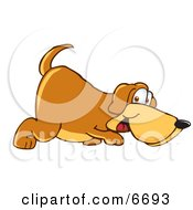 Brown Dog Mascot Cartoon Character Sniffing The Ground