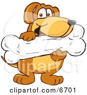 Poster, Art Print Of Brown Dog Mascot Cartoon Character Holding A Big Doggy Bone Treat