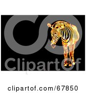 Royalty Free RF Clipart Illustration Of A Fiery Zebra On A Black Background With Text Space