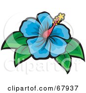 Beautiful Blue Hibiscus Flower With Green Leaves
