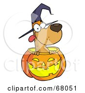Happy Dog In A Carved Halloween Pumpkin