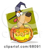 Royalty Free RF Clipart Illustration Of A Happy Dog Popping Out Of A Carved Halloween Pumpkin On Green