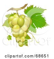 Cluster Of Fresh Green Grapes On A Green Vine
