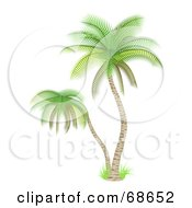 Royalty Free RF Clipart Illustration Of A Palm Tree With Delicate Green Leaves
