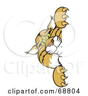 Royalty Free RF Clipart Illustration Of A Bobcat Character Peeking Around A Blank Sign by Toons4Biz