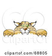 Royalty Free RF Clipart Illustration Of A Bobcat Character Looking Over A Sign
