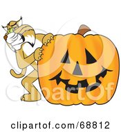 Royalty Free RF Clipart Illustration Of A Bobcat Character With A Pumpkin by Toons4Biz