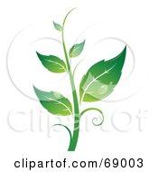 Royalty Free RF Clipart Illustration Of A Dewy Green Organic Leafy Plant