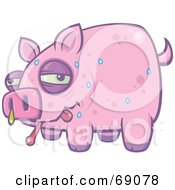Royalty Free RF Clipart Illustration Of A Sweating And Snotting Pink Pig With The Swine Flu by John Schwegel