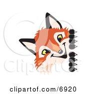 Fox Mascot Cartoon Character Peeking Around A Corner
