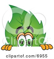 Leaf Mascot Cartoon Character Scared And Peeking Over A Surface