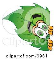 Leaf Mascot Cartoon Character Peeking Around A Corner