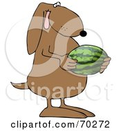 Brown Dog Holding A Watermelon