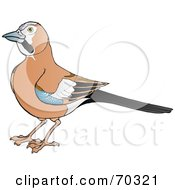 Royalty Free RF Clipart Illustration Of A Brown Jay With Blue Black And White Markings On Its Wings by Snowy