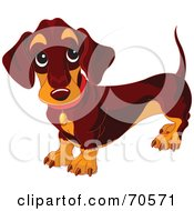 Royalty Free RF Clipart Illustration Of A Dark Wiener Dog Standing And Looking Up