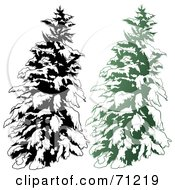 Royalty Free RF Clipart Illustration Of An Evergreen Tree Flocked In Snow With A Black And White Copy Version 1