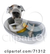 Royalty Free RF Clipart Illustration Of A 3d Jack Russell Terrier Pooch Character Bathing Pose 2