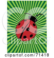 Royalty-Free (RF) Clipart Illustration of a Red Ladybug Beetle On A Green Bursting Background by mheld #COLLC71418-0107