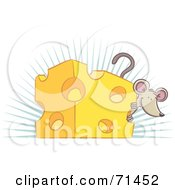 Happy Mouse Peeking Around A Block Of Cheese