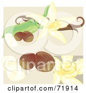 Royalty Free RF Clipart Illustration Of Vanilla Flowers And Nuts