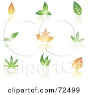 Royalty-Free (RF) Clipart Illustration of a Digital Collage Of Leaves With Reflections by cidepix