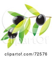 Royalty Free RF Clipart Illustration Of A Branch With Leaves And Black Olives by cidepix