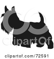Royalty Free RF Clipart Illustration Of A Dark Brown Scottish Terrier Dog Silhouette by pauloribau