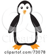 Cute Black And White Penguin Bird Facing Front