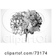 Royalty Free RF Clipart Illustration Of A Black And White Head Of Flowers Over Gray Shading