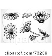 Royalty Free RF Clipart Illustration Of A Digital Collage Of Black And White Daisy Flower Elements by BestVector