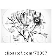 Royalty Free RF Clipart Illustration Of A Black And White Tulip Lily And Daffodil Bouquet