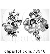 Royalty Free RF Clipart Illustration Of A Digital Collage Of Two Vintage Black And White Bouquets