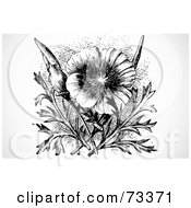 Black And White California Poppy Flower And Plant
