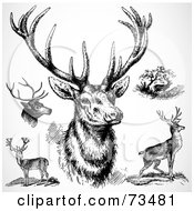 Royalty Free RF Clipart Illustration Of A Digital Collage Of Black And White Bucks by BestVector