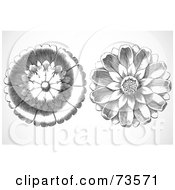 Royalty Free RF Clipart Illustration Of A Digital Collage Of Two Elegant Black And White Daisy Woodcut Circles by BestVector